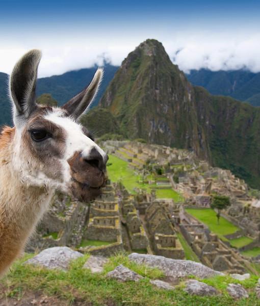 Machu Picchu Peru Llama Landscape
